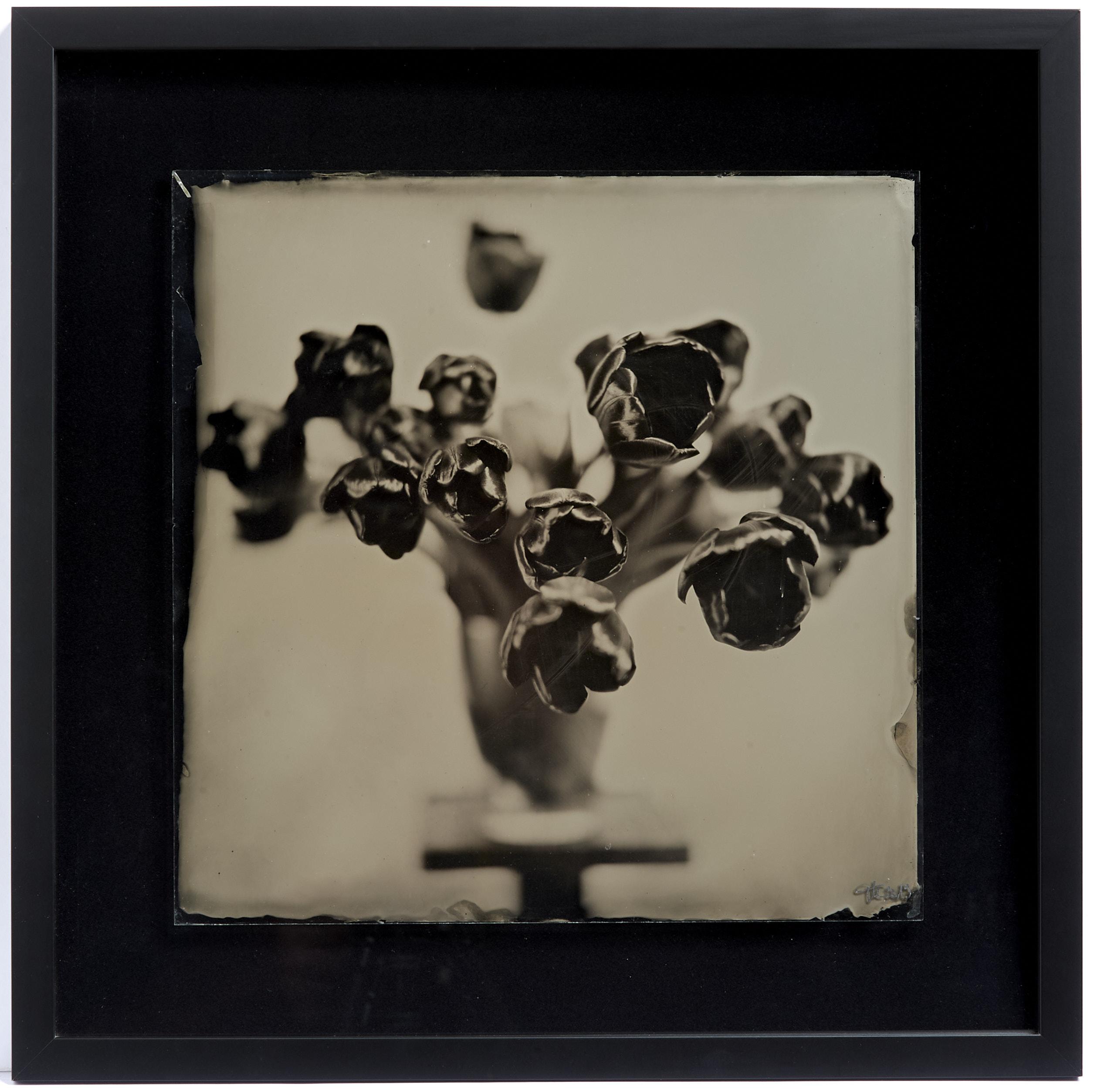 Rote Tulpen Glas Kollodium Nassplatte, Wet Plate